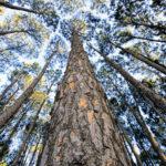 100RACINER - association belge dans le cadre de la plantation des arbres