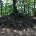 """100RACINER avec le texte de Extrait de """"la Vie secrètes des arbres"""" Peter Wohlleben - ingénieur forestier et écrivain"""