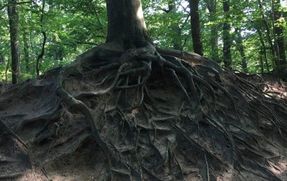 Pourquoi planter un arbre ?