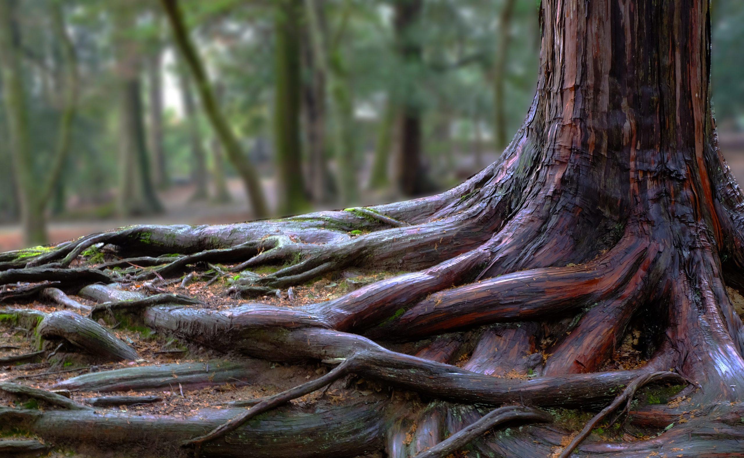 Enraciner un arbre